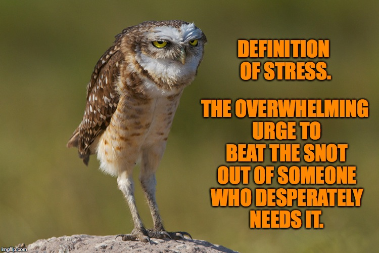aaaand it's....MONDAY. | DEFINITION OF STRESS. THE OVERWHELMING URGE TO BEAT THE SNOT OUT OF SOMEONE WHO DESPERATELY NEEDS IT. | image tagged in stressed out owl | made w/ Imgflip meme maker