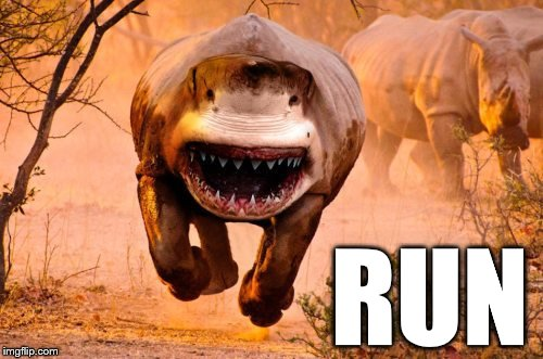 Rino Shark | RUN | image tagged in rino shark | made w/ Imgflip meme maker