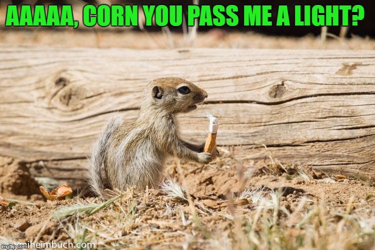 AAAAA, CORN YOU PASS ME A LIGHT? | made w/ Imgflip meme maker