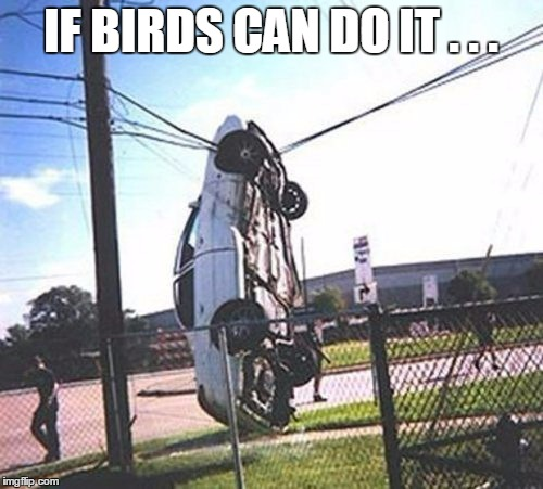 IF BIRDS CAN DO IT . . . | made w/ Imgflip meme maker