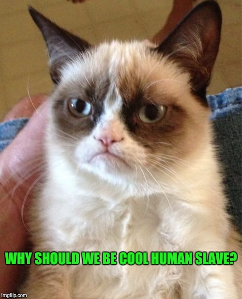 Grumpy Cat Meme | WHY SHOULD WE BE COOL HUMAN SLAVE? | image tagged in memes,grumpy cat | made w/ Imgflip meme maker