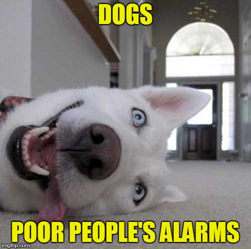 DOGS POOR PEOPLE'S ALARMS | made w/ Imgflip meme maker