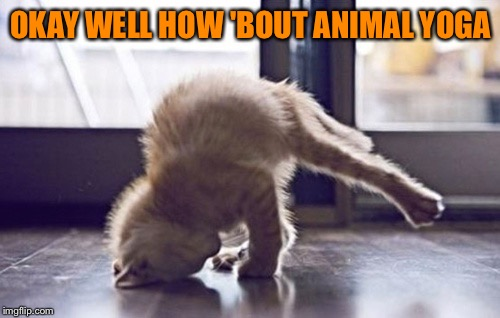 OKAY WELL HOW 'BOUT ANIMAL YOGA | made w/ Imgflip meme maker