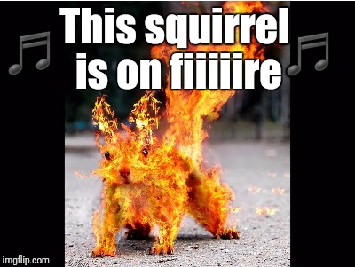 This squirrel is on fiiiiire ♬ ♬ | made w/ Imgflip meme maker