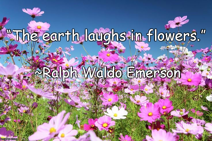 "Flowers | ""The earth laughs in flowers."" ~Ralph Waldo Emerson 