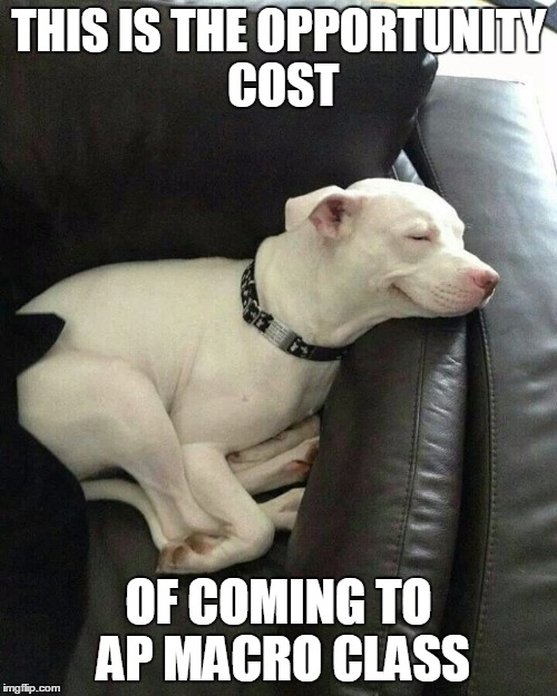 Sleeping Dog | THIS IS THE OPPORTUNITY COST OF COMING TO AP MACRO CLASS | image tagged in sleeping dog | made w/ Imgflip meme maker