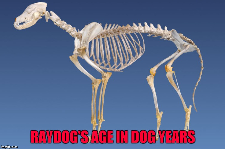 RAYDOG'S AGE IN DOG YEARS | made w/ Imgflip meme maker