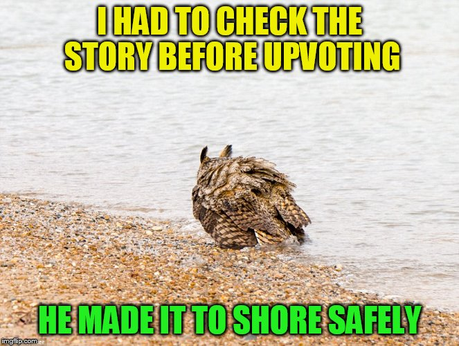 I HAD TO CHECK THE STORY BEFORE UPVOTING HE MADE IT TO SHORE SAFELY | made w/ Imgflip meme maker