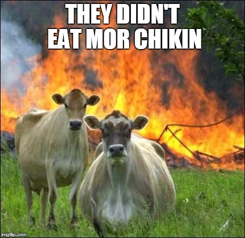 Evil Cows Meme | THEY DIDN'T EAT MOR CHIKIN | image tagged in memes,evil cows | made w/ Imgflip meme maker
