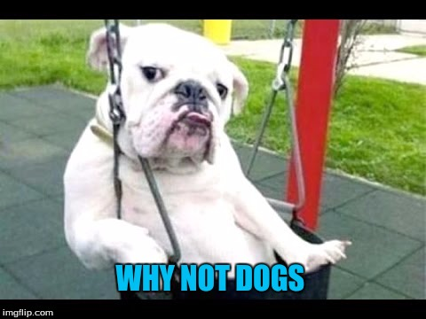 WHY NOT DOGS | made w/ Imgflip meme maker