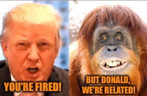 Nepotism at its best | YOU'RE FIRED! BUT DONALD, WE'RE RELATED! | image tagged in donald trump is an orangutan,memes | made w/ Imgflip meme maker