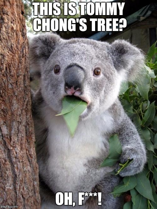 Surprised Koala Meme | THIS IS TOMMY CHONG'S TREE? OH, F***! | image tagged in memes,surprised koala | made w/ Imgflip meme maker