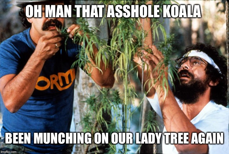 OH MAN THAT ASSHOLE KOALA BEEN MUNCHING ON OUR LADY TREE AGAIN | made w/ Imgflip meme maker