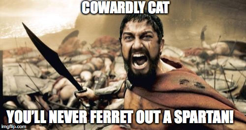 Sparta Leonidas Meme | YOU'LL NEVER FERRET OUT A SPARTAN! COWARDLY CAT | image tagged in memes,sparta leonidas | made w/ Imgflip meme maker