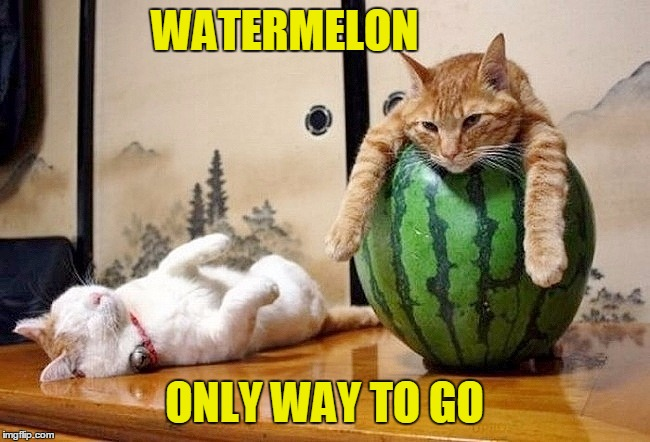 WATERMELON ONLY WAY TO GO | made w/ Imgflip meme maker