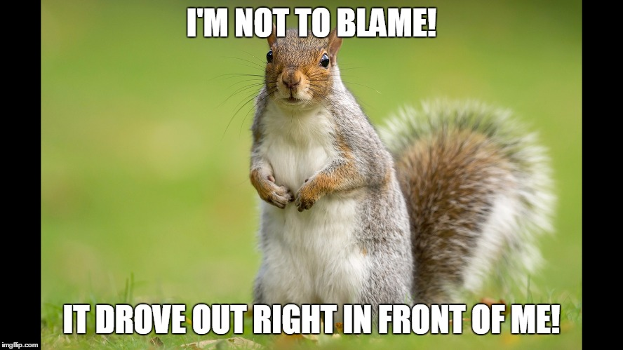 I'M NOT TO BLAME! IT DROVE OUT RIGHT IN FRONT OF ME! | image tagged in squirrel | made w/ Imgflip meme maker