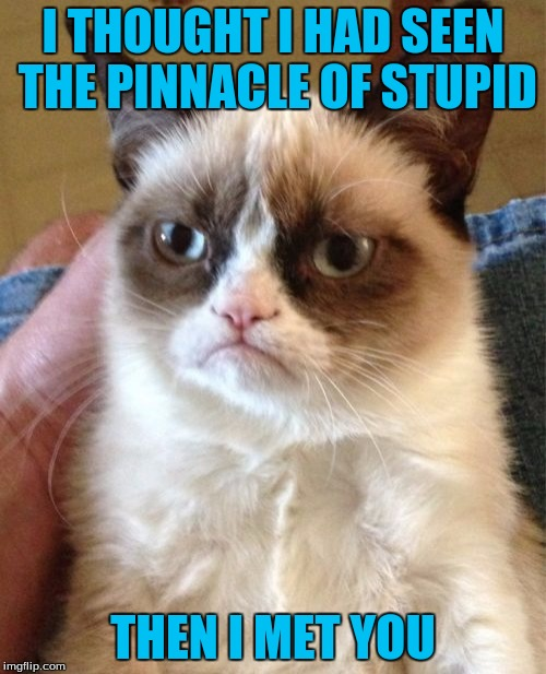 Grumpy Cat Meme | I THOUGHT I HAD SEEN THE PINNACLE OF STUPID THEN I MET YOU | image tagged in memes,grumpy cat | made w/ Imgflip meme maker