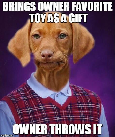 I wonder if dogs get sad whenever we throw their stuff like that | BRINGS OWNER FAVORITE TOY AS A GIFT OWNER THROWS IT | image tagged in bad luck raydog,memes,trhtimmy,dogs,animals | made w/ Imgflip meme maker