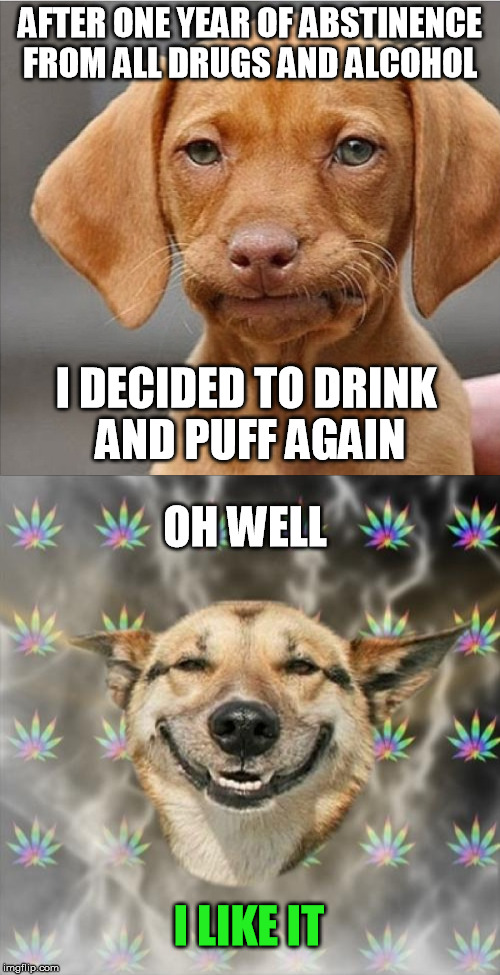 Responsible use after getting my shit together. | AFTER ONE YEAR OF ABSTINENCE FROM ALL DRUGS AND ALCOHOL I DECIDED TO DRINK AND PUFF AGAIN I LIKE IT OH WELL | image tagged in stoner dog,dissapointed puppy | made w/ Imgflip meme maker