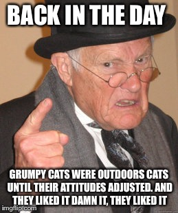 Back In My Day Meme | BACK IN THE DAY GRUMPY CATS WERE OUTDOORS CATS UNTIL THEIR ATTITUDES ADJUSTED. AND THEY LIKED IT DAMN IT, THEY LIKED IT | image tagged in memes,back in my day | made w/ Imgflip meme maker