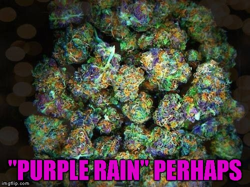 """PURPLE RAIN"" PERHAPS 