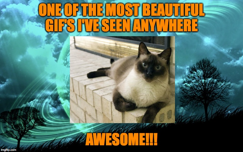 ONE OF THE MOST BEAUTIFUL GIF'S I'VE SEEN ANYWHERE AWESOME!!! | made w/ Imgflip meme maker