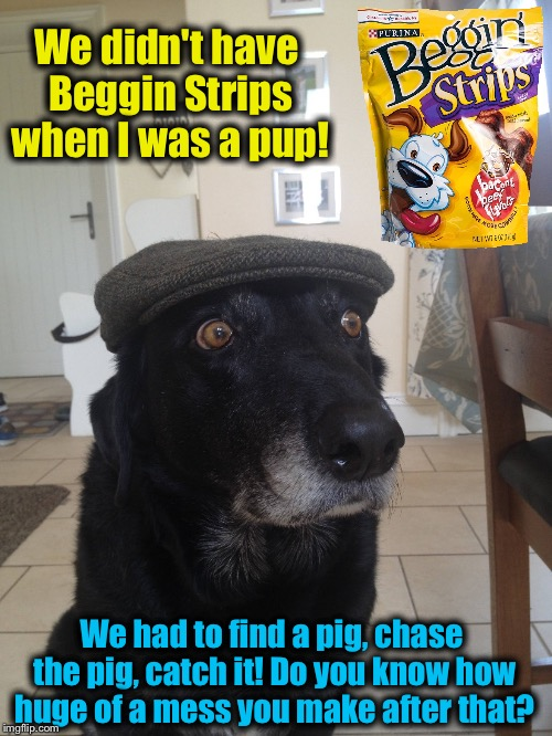 Pups these days have way too easy! | We didn't have Beggin Strips when I was a pup! We had to find a pig, chase the pig, catch it! Do you know how huge of a mess you make after  | image tagged in old dog,memes,evilmandoevil,funny | made w/ Imgflip meme maker
