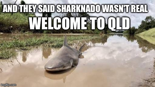 Sharknado QLD | AND THEY SAID SHARKNADO WASN'T REAL WELCOME TO QLD | image tagged in gifs,sharknado,qld,cyclone,debbie | made w/ Imgflip meme maker