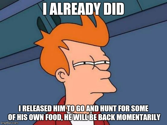 Futurama Fry Meme | I ALREADY DID I RELEASED HIM TO GO AND HUNT FOR SOME OF HIS OWN FOOD, HE WILL BE BACK MOMENTARILY | image tagged in memes,futurama fry | made w/ Imgflip meme maker