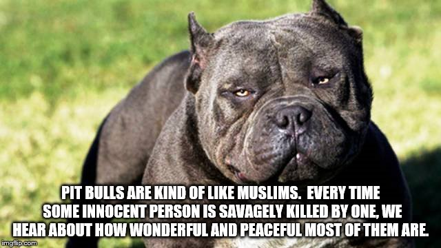 PIT BULLS ARE KIND OF LIKE MUSLIMS.  EVERY TIME SOME INNOCENT PERSON IS SAVAGELY KILLED BY ONE, WE HEAR ABOUT HOW WONDERFUL AND PEACEFUL MOS | image tagged in dogs | made w/ Imgflip meme maker