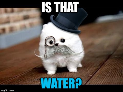 If You Ask Me (Dog) | IS THAT WATER? | image tagged in if you ask me dog | made w/ Imgflip meme maker