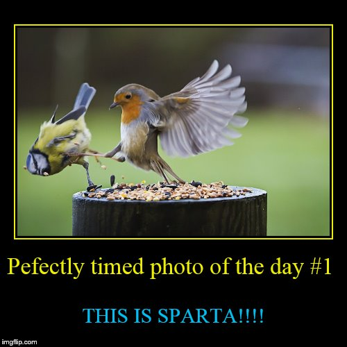 New series I'd like to start inspired by Juicydeath1025's weird photo of the day! | Pefectly timed photo of the day #1 | THIS IS SPARTA!!!! | image tagged in funny,demotivationals,perfectly timed photo | made w/ Imgflip demotivational maker