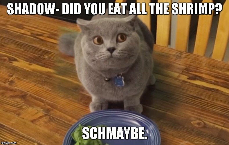 Guilty Cat | SHADOW- DID YOU EAT ALL THE SHRIMP? SCHMAYBE. | image tagged in cat,guilt | made w/ Imgflip meme maker