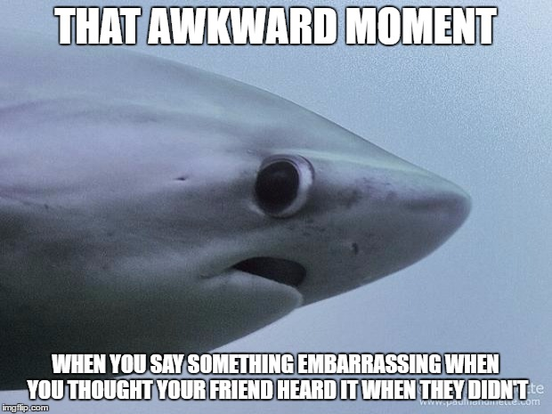 Awkward Shark | THAT AWKWARD MOMENT WHEN YOU SAY SOMETHING EMBARRASSING WHEN YOU THOUGHT YOUR FRIEND HEARD IT WHEN THEY DIDN'T | image tagged in awkward shark | made w/ Imgflip meme maker