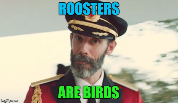 ROOSTERS ARE BIRDS | made w/ Imgflip meme maker