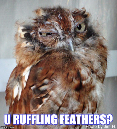 U RUFFLING FEATHERS? | made w/ Imgflip meme maker