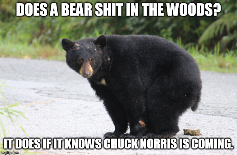 DOES A BEAR SHIT IN THE WOODS? IT DOES IF IT KNOWS CHUCK NORRIS IS COMING. | made w/ Imgflip meme maker