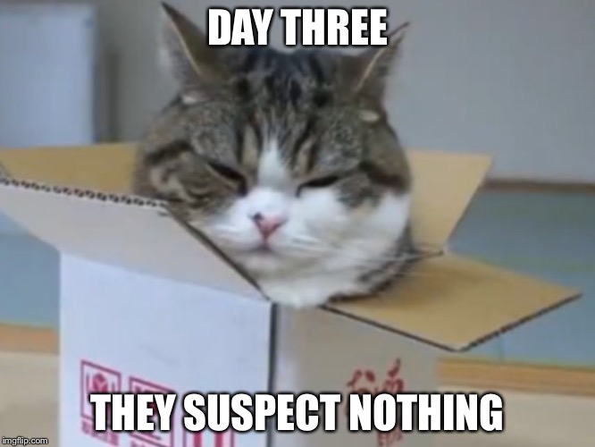 They Suspect Nothing | DAY THREE THEY SUSPECT NOTHING | image tagged in memes,cats | made w/ Imgflip meme maker