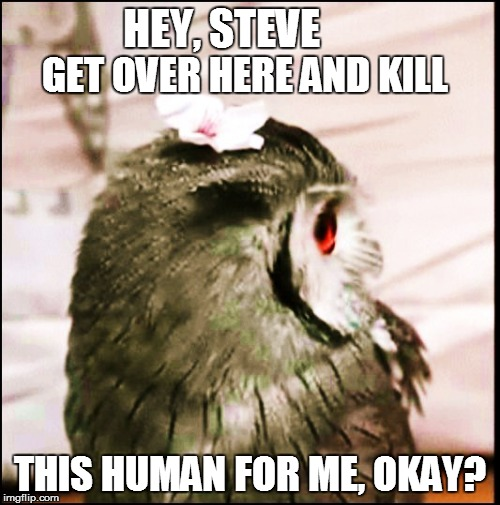 HEY, STEVE THIS HUMAN FOR ME, OKAY? GET OVER HERE AND KILL | made w/ Imgflip meme maker