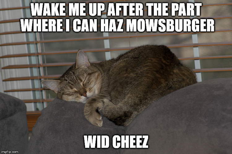 WAKE ME UP AFTER THE PART WHERE I CAN HAZ MOWSBURGER WID CHEEZ | image tagged in wake me up cat | made w/ Imgflip meme maker