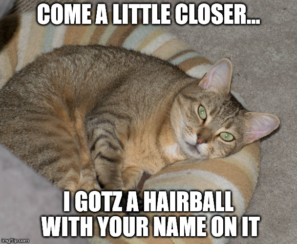 COME A LITTLE CLOSER... I GOTZ A HAIRBALL WITH YOUR NAME ON IT | image tagged in sour cat | made w/ Imgflip meme maker