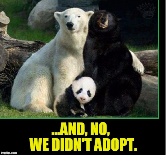 The Bear Family Speaks Out | ...AND, NO,   WE DIDN'T ADOPT. | image tagged in vince vance,polar bear,black bear,baby panda,daddy bear mama bear baby bear,goldilocks | made w/ Imgflip meme maker