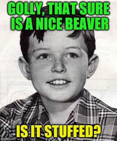 GOLLY, THAT SURE IS A NICE BEAVER IS IT STUFFED? | made w/ Imgflip meme maker