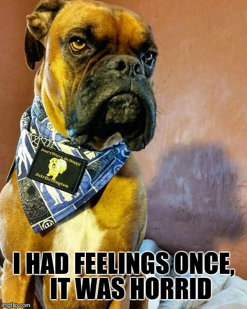 Grumpy Dog | I HAD FEELINGS ONCE,   IT WAS HORRID | image tagged in grumpy dog | made w/ Imgflip meme maker