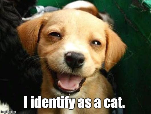 Dog Smiling | I identify as a cat. | image tagged in dog smiling | made w/ Imgflip meme maker