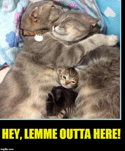The Katz Family | HEY, LEMME OUTTA HERE! | image tagged in vince vance,vince vance and the valiants,funny cat memes,cats,cute kitten,cat family | made w/ Imgflip meme maker