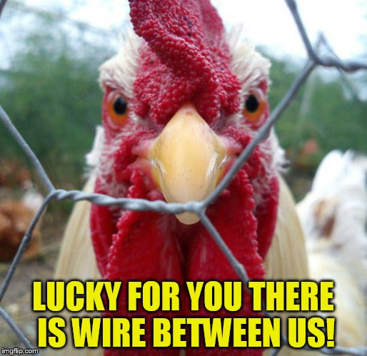 LUCKY FOR YOU THERE IS WIRE BETWEEN US! | made w/ Imgflip meme maker