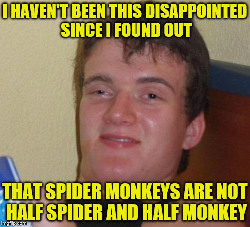 10 Guy Meme | I HAVEN'T BEEN THIS DISAPPOINTED SINCE I FOUND OUT THAT SPIDER MONKEYS ARE NOT HALF SPIDER AND HALF MONKEY | image tagged in memes,10 guy | made w/ Imgflip meme maker