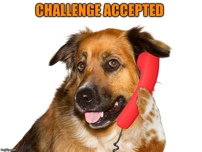 Dog On The Phone | CHALLENGE ACCEPTED | image tagged in dog on the phone | made w/ Imgflip meme maker