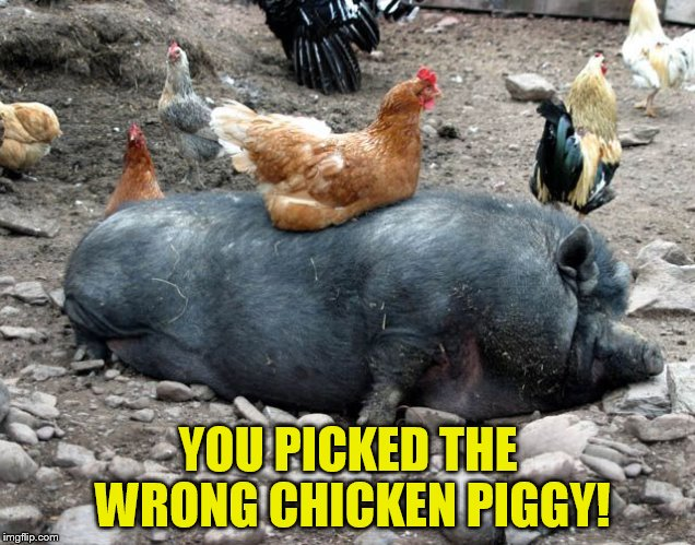 YOU PICKED THE WRONG CHICKEN PIGGY! | made w/ Imgflip meme maker